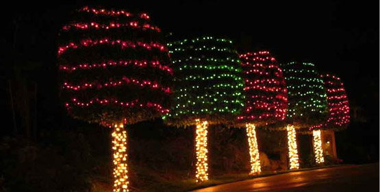Outside Trees with Christmas Lights
