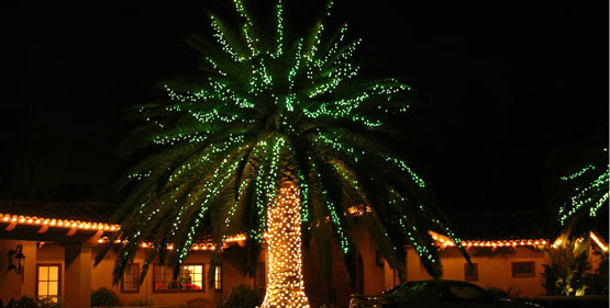 Las Vegas Palm Tree with Christmas Lights